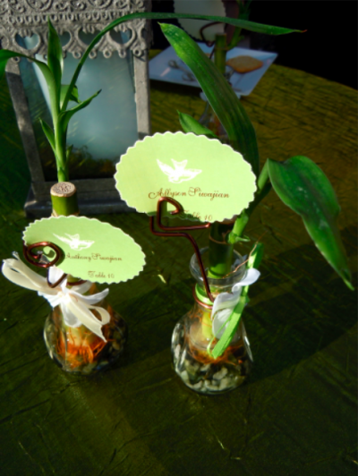 bamboo plants in glass vases with cards attached