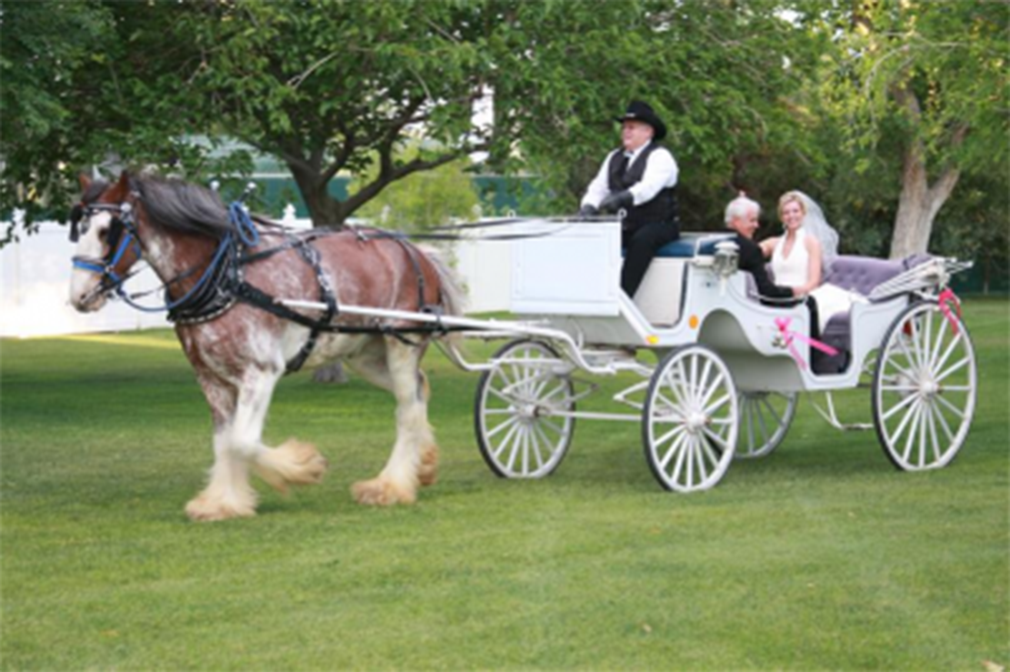 horse-drawn carriage copy