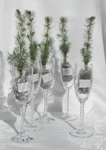 "Seedlings,Lasting ""Green"" Favors for you Las Vegas Wedding"