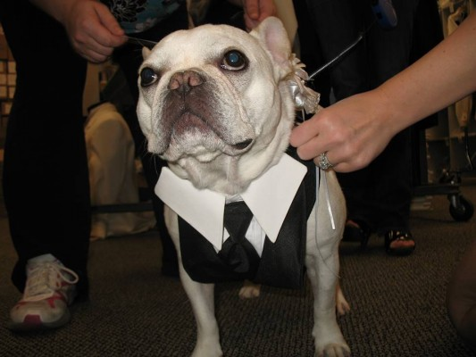 Custom made wedding vest for dogs!